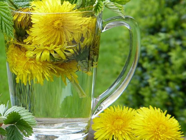 detoks čaj od maslačka, soul food internet trgovina