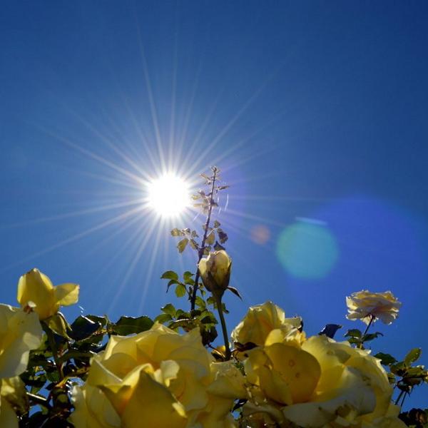 sunce za smanjenje anksioznosti, soul food internet trgovina