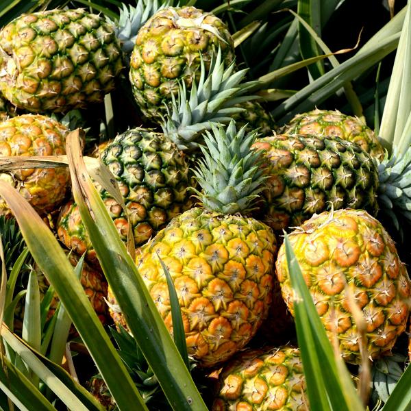 ananas za smanjivanje anksioznosti, soul food internet trgovina