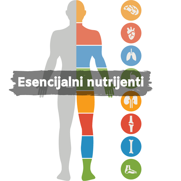 nutrijenti esencijalni za organe, soul food interne trgovina